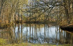 Pond in the woods in Spring. Stock Photos