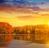 The pond in the woods at sunset Royalty Free Stock Images