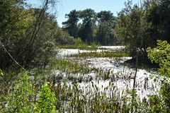Pond in woods, Eagle Lake Park royalty free stock photos