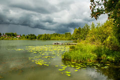 Pond with yellow pods Royalty Free Stock Photography