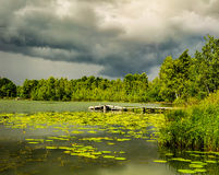 Pond with yellow pods Royalty Free Stock Images