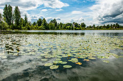 Pond with yellow pods. In changeable weather royalty free stock photos