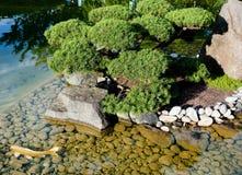 Pond in the zen garden. Koi pond. Fragment of the zen garden Royalty Free Stock Image