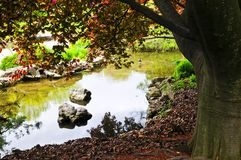 Pond in zen garden Stock Photo