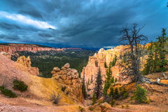 Ponderosa Canyon Bryce National Park Stock Photo