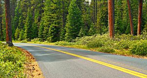 Ponderosa Drive. State Hwy 242 through the ponderosa forest west of Sisters, OR stock images