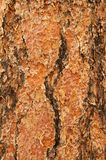 Ponderosa Pine Bark. A background of very rough Ponderosa Pine bark in a vertical orientation Stock Photography