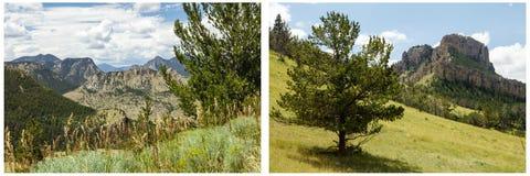 Ponderosa pine tree meadow grass hillside collage. Rugged rocky hills high mountain peak grassy valley slope sage brush clouds blue sky scenery landscape scene Stock Photo