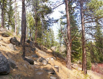Ponderosa pines along forest trail Stock Photos