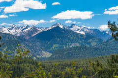 Ponderosa sosen Sceniczny Byway, Idaho zdjęcie royalty free
