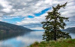 Ponderosa sosny Okanagan jezioro obraz royalty free