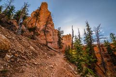 Ponderosa Trail looking up Bryce Canyon Stock Photography