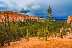 Ponderosapijnbomen Bryce Canyon National Royalty-vrije Stock Afbeelding