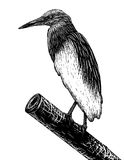 Pondheron sketch Stock Photography