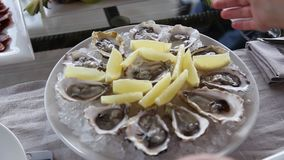 Pondo uma placa com as ostras sobre a tabela vídeos de arquivo