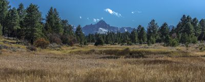 Pondorosa Pine Trees frame Mount Sneffels and San Juan Mountains. OCTOBER 12, 2017 - Pondorosa Pine Trees frame Mount Sneffels and San Juan Mountains in Autumn Royalty Free Stock Photography