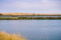 Ponds and Levees in the south of San Francisco bay, Mountain View, California; Recently closed and capped Palo Alto Landfill in stock photography