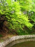 pondscape Стоковое Фото