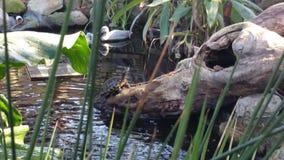Pondscape Royaltyfria Bilder