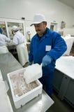 Poner el hielo en los filetes de pescados Fotografía de archivo