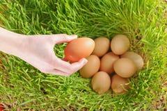 Huevos del pollo entre el trigo verde Fotografía de archivo
