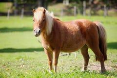 poney λιβαδιών στοκ εικόνες με δικαίωμα ελεύθερης χρήσης