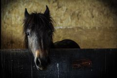 Poney Photographie stock libre de droits