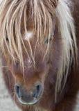 Poney stock fotografie