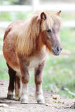 Poney. Images libres de droits