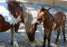 Poney avec des petits animaux Photo libre de droits