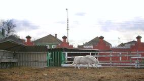 Poney blanc dans un zoo clips vidéos