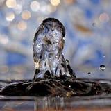 Poney - cheval dans l'eau photo libre de droits