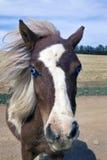 Poney d'obturation Photo libre de droits