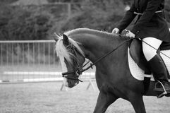 Poney d'Obturation B Photographie stock libre de droits