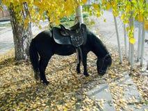 Poney de cheval Image libre de droits