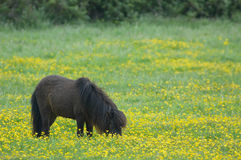 Poney de printemps Images stock