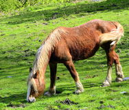 Poney en lambeaux Photographie stock