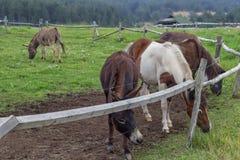 Poney et ânes au ranch avec la barrière électrique Photographie stock
