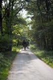 Poney et piège passant par des bois de Killarney Photos stock