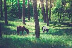 Poney in het hout Stock Afbeelding