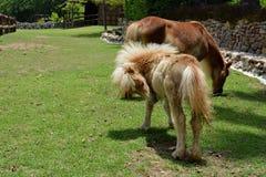 poney in landbouwbedrijf stock fotografie