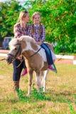 Poney Landschap De zomer Stock Fotografie