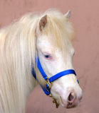 Poney observé bleu Photo libre de droits