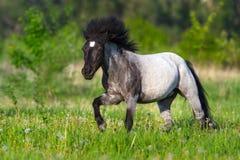 Poney op groen gras in werking dat wordt gesteld dat royalty-vrije stock foto's