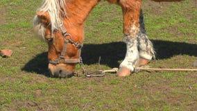 Poney op landbouwbedrijf stock videobeelden