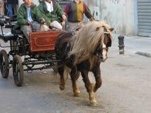 Poney in uitrusting Stock Fotografie