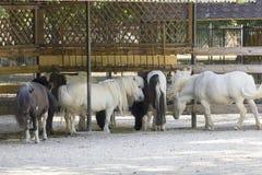 poneys Stock Fotografie