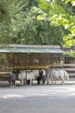 poneys Images libres de droits