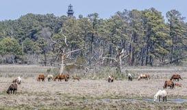 Poneys de Chincoteague avec le phare d'Assateague Image libre de droits