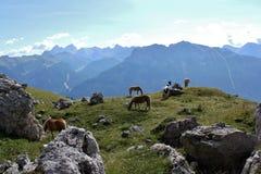 Poneys door de Rosengarten-Groep, Dolomiet stock afbeeldingen